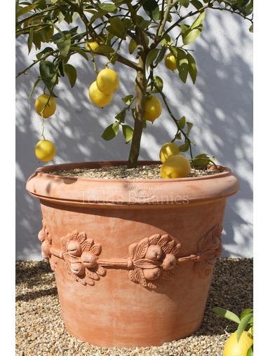 Vaso Con Frutta