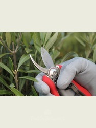 Compact Secateurs Our most used tool!